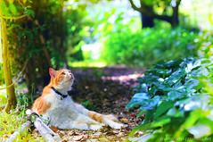Little Green Path / DSC_6816i (catphoto.net) Tags: park green animal japan cat 50mm tokyo nikon kitty d300 topazclean topazdenoise topazinfocus