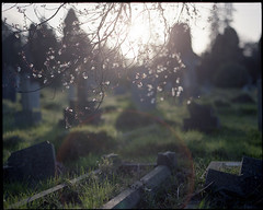 Meet you at the cemetery gates ([Photom]) Tags: light 120 film pentax flare 6x7