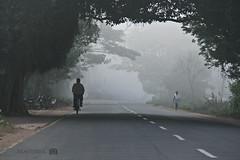 A misty morning @ ECR (Praveen_Guna) Tags: morning mist nature fog earlymorning scenic moment chennai ecr manwalking mancycling roadscoveredwithmist