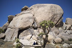 Rocks and Joshua Tree (susan catherine) Tags: landscape nationalpark joshuatree x100 ohboyphotosofrocks