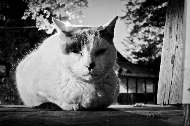 Today's Cat@2012-04-28
