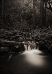 morning light in Saratoga Creek (stormiticus) Tags: longexposure blackandwhite bw kodak largeformat 5x7 txp canham pyrocathd saratogacreek largeformatmeetupgroup