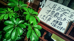 2014-03-29-7633 (achicoda) Tags: night phonecam democracy student protest taiwan taipei   taiwanese    legislativeyuan  taiwannotchina nokia808pureview    sunflowerstudentmovement negotiatedinsecret