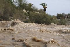 Bendita agua que discurrió con fuerza por el barranco de Maspalomas