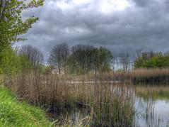 Bure Park (Ian Gedge) Tags: park uk trees england lake water reeds bure pond britain norfolk greatyarmouth eastanglia