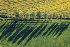 Spring Day (Aerial Photography) Tags: trees shadow field yellow by landscape la mood landwirtschaft feld aerial rape gelb birch agriculture blte landschaft bume raps schatten deu stimmung birke luftbild leaftree luftaufnahme rapsfelder lineoftrees bayernbavaria deutschlandgermany ndb laubbaum deciduoustree baumreihe rowoftrees foliagetree buchaerlbach buchamerlbachlkrlandshut fotoklausleidorfwwwleidorfde 01052012 1ds78443 hofenstall kugelpoint