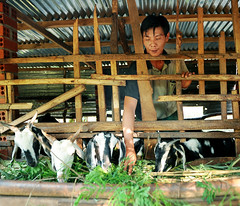 Workers with disabilities in Dong Nai