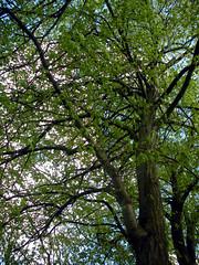 Majestic Nature (Lisa/Anders - Ninja Transvestit Danmark) Tags: sky tree nature majestic
