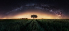 Milky way and tree (Ivn F.) Tags: panorama verde night wow way landscape arbol noche nikon nightout pano ngc paisaje via nocturna lonely 28 fotografia tamron milky fotografo nocturno 1530 lactea nightstar d800e