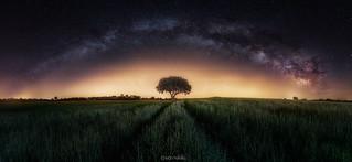 Milky way and tree