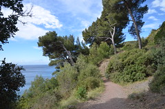 Sea path (dfromonteil) Tags: trees light sea sun mer france soleil spring mediterranean camino path lumire arbres printemps chemin mditerrane