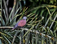What bird is this? (Tungmay Pimjoy) Tags: bird thailand nikon d3200