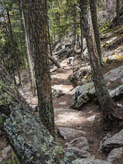21 May 16 Forested Trail (ethanbeute) Tags: forest colorado hiking hike coloradosprings hikingtrail pikenationalforest greenmountainfalls forested foresttrail catamounttrail catamountreservoir catamountcreek