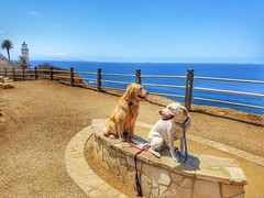 Kelly, Cassie, and a Lighthouse. (Jake McGee) Tags: california lighthouse dogs goldenretriever labrador hiking adventure palosverdes