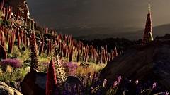 Sunrise Teide NP (flowerikka) Tags: sunrise wildflowers natternkopf teidenationalpark islacanaria echiumwildpreti