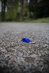 IMG_6663 (LePeKeT) Tags: bleu plume sol solitude calme paisible