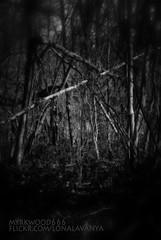 Mannaz  (Myrkwood666) Tags: wood bw monochrome forest blackwhite symbol zwartwit sw schwarzweiss bos wald pagan rune futhark asatru mannaz seelenwinter mrkskygge myrkwood666