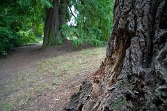PATHWAY (DESPITE STRAIGHT LINES) Tags: park trees canada tree moss woods nikon bc britishcolumbia branches vancouverisland sidney saanichton d700 branchlimb penderpark ilobsterit