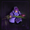 Harlequin (Mara ~earth light~) Tags: world people inspiration texture love photoshop dance tears mood purple mourning symbol expression joy gimp farewell soul creativecommons laugh harlequin intuition ourtime circustent contemporaryartsociety photoshopcreativo moodcreations piexcellance photographymypassion mara~earthlight asquaresuperstarstemple