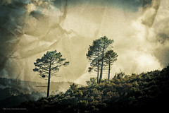 Two trees on paper (By Corsu) Tags: wood trees two france texture nature by canon paper eos photo flickr corse papier foret arbre paysages effet preset corsu 550d