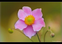 Flower (bartholowaty | Photography) Tags: flowers flower macro nature canon close natural 2012 70200mm 2011 60d