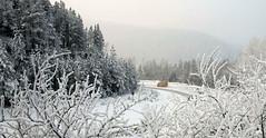 Frío en Europa: Rusia (La Extra - Grupo Diario de Morelia) Tags: en de la europa morelia noticias michoacán frío extra diario rusia periódico