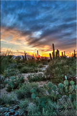 Saguaro Sunset (L Geoffroy) Tags: park travel blue sunset red wild summer arizona cactus sky orange usa cloud sun mountain plant mountains hot southwest color tree nature silhouette yellow rock night clouds america forest cacti landscape outdoors colorful open desert bright time tucson dusk background north national pear vegetation geology saguaro sonoran prickly hdr ocotillo cholla lgeoffroy