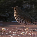 Natura - Aves