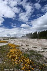 Barren Daisy (Ramen Saha) Tags: flower clouds landscape bluesky yellowflower yellowstonenationalpark yellowmonkeyflower mimulusguttatus uppergeyserbasin daisygeyser ramensaha