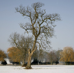 THE OLD TREE (Adam Swaine) Tags: frozenwinterland mostbeautifulpicturesmbppictures naturelovers rural sky thisphotorocks trees uk wooden countryside county east england english flora counties canon britain blue beautiful snowscenes snow 24105mm wwwadamswainecouk adamswaine