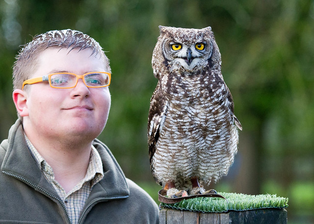 African Spotted Eagle Owl and Ross