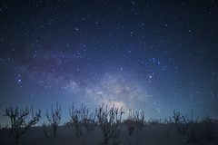 Galaxy grass (masahiro miyasaka) Tags: blue winter white snow flower tree japan night canon stars iso3200 star galaxy astrophotography wallpapers milkyway startrail eos5dmarkⅱ