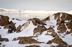 Iceland rocks :) (SteinaMatt) Tags: winter matt landscape iceland nikon 28 february nikkor sland febrar 2012 vestfirir westfjords 1755 steinunn steina krksfjararnes reykhlasveit d7000 matthasdttir
