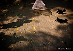 The world of shadow XIV (Sopnochora) Tags: life light shadow reflection silhouette canon eos flickr day shadows object ngc lifestyle peoples story excellent ttl bp uwl bangladesh 1022mm gettyimages 500d shadow flickr canon light best light day shadow image photographers peoples living bangladeshi 500d sopnochora mursalin mdhuzzatul