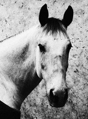 Equus F.C. (Ivn Adrin) Tags: portrait horse animal caballo equino ltytr1 bestcapturesaoi