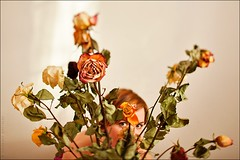 Dinara's eyes (Koldunov Brothers) Tags: flowers girl shift tilt canontse45mmf28 canoneos5dmark2