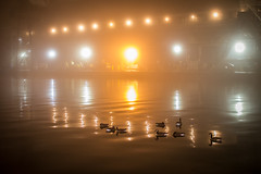 Geese & Foggy Lights (*Imperialis*) Tags: toronto water fog lights geese 7d canadageese sugarbeach sigma30mmf14