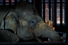 As thick as elephant skin (JoLoLog) Tags: canada elephant calgary joe alberta calgaryzoo canonxsi