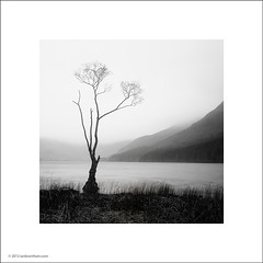 Buttermere Tree (Ian Bramham) Tags: longexposure bw white lake black tree photo cumbria buttermere ianbramham