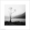 Buttermere Tree (Ian Bramham) Tags: longexposure bw white lake black tree photo cumbria buttermere ianbramham