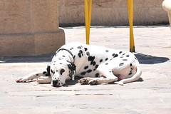 La calma (Francisvet) Tags: animal perro mascota canina