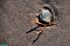Beached (mcshots) Tags: ocean california travel sea usa beach nature water colors coast sand rocks stock sealife pebbles malibu socal mcshots reef tidepools springtime losangelescounty