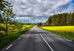 Yellow road (Maria Eklind) Tags: road shadow sky nature yellow se countryside skåne sweden outdoor himmel rape sverige väg rapeseed brassicanapus landsbygd skånelän spannmål fotosondag fs160515