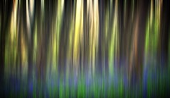 Abstract Forest (Martyn.Smith.) Tags: trees abstract tree bluebells wales forest canon woodland eos photo flickr image forestry blurred motionblur bluebellwood crickhowell nikcolorefex 700d