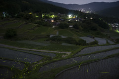 Fireflies dance in the terraced rice fields. (Say.xii) Tags: japan nightview ricefield gifu firefly