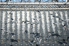 Fly away with me. (Carlos Nizam) Tags: roof bird japan fly pattern action many dove matsumoto