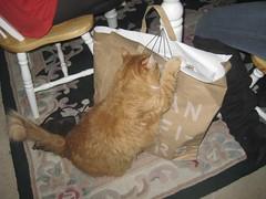 bailey wanted janina's presents