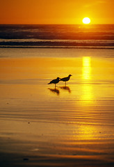 Sunset and Friendship (h_roach) Tags: ocean friends sunset sea orange beach birds yellow vertical oregon ngc shore pacificnorthwest frienship seaguls