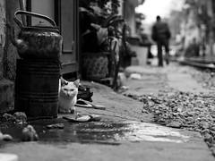 Lurking, Tran Phu - Hanoi (adde adesokan) Tags: street travel people pen photography asia streetphotography documentary olympus vietnam ep3 streetphotographer m43 mft mirrorless microfourthirds theblackstar mirrorlesscamera streettogs addeadesokan
