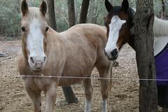 IMG_6201 (Barbara Alexander) Tags: horses boundaries selfimprovement selfawareness mentorship barbaraalexander equineexperientiallearning eponaridge